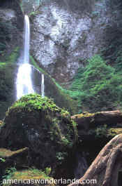 marymere falls - olympic national park washington