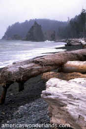 olympic national park beach picture